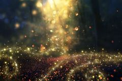 Blurred abstract photo of light burst among trees and glitter golden bokeh lights. Stock Photography
