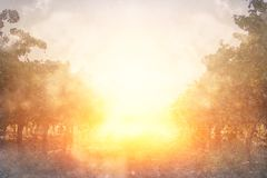blurred abstract photo of light burst among trees and glitter golden bokeh lights. royalty free stock photos