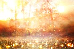 blurred abstract photo of light burst among trees and glitter golden bokeh lights. stock photos