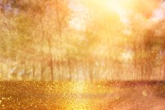 Free Blurred Abstract Photo Of Light Burst Among Trees And Glitter Golden Bokeh Lights. Stock Image - 123753641