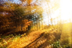 Blurred autumn forest stock photos