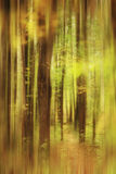 Blurred autumn forest landscape Stock Photos