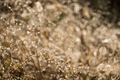 Blurred autumn grass with dew drops in the morning Stock Photography