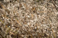Blurred autumn grass with dew drops in the morning Stock Photo