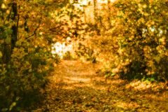 Blurred autumn landscape backlit with trees, fallen yellow leaves and the soft light. Photography soft lens.  Stock Photography