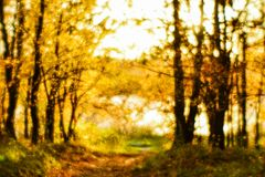 Blurred autumn landscape backlit with trees, fallen yellow leaves and the soft light. Photography soft lens.  Royalty Free Stock Images