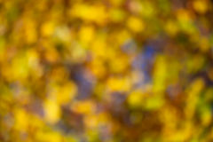 Blurred autumn leaves Royalty Free Stock Photo
