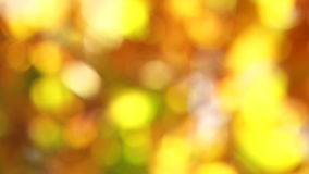 Blurred Autumn Leaves Moved By Wind. In the frame there is a blurred video shot of yellow and green tree leaves bright with the sunlight moved by the light wind stock video footage