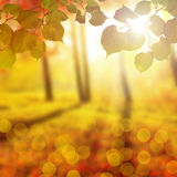 Blurred autumn Park, nature colorful yellow background Royalty Free Stock Image