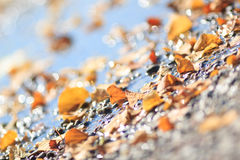 Blurred autumn sparkling pattern stock photography