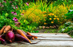Blurred background of autumn garden and wooden desk with beet and carrot Stock Photo