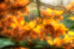 Blurred background of autumn oak leaves Royalty Free Stock Photo