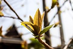 Blurred background. Beautiful budding on blurred background Stock Image