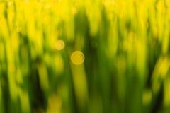 Blurred Background - Beautiful Natural Bokeh Stock Photo