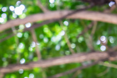 Blurred background with bokeh. Through the tree royalty free stock photography