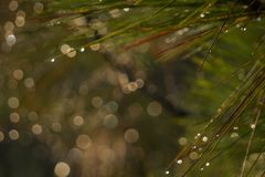 Blurred background and bokeh from the tree. stock photography