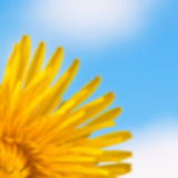 Blurred background with flower. Stock Photo