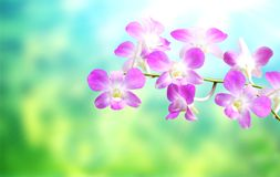 Blurred background with flowers of orchid Royalty Free Stock Image