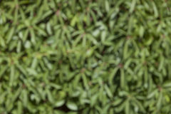 Blurred background of green plants Stock Photos