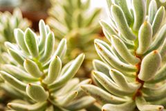 Blurred background images of succulents, macro stock images