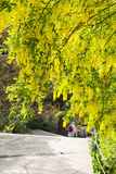 blurred background landscape view of two women tourists coming down the stairs in the park of Livadia Palace Stock Photography