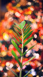 Blurred background made with Christmas tree and green plant Stock Photos