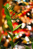 Blurred background made with Christmas tree and green plant Royalty Free Stock Photo