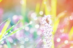 Blurred background of nature Royalty Free Stock Images