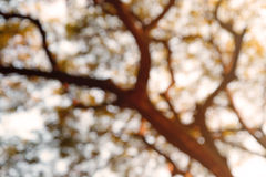 Blurred background from nature with softlight Royalty Free Stock Photography