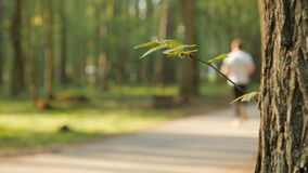 Blurred background of people activities in park with bokeh, spring and summer season. Runners stock video footage