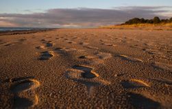 Blurred background picture of footprints on sand beach along sea in the colorful evening Royalty Free Stock Images