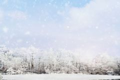 Beautiful Winter Landscape of Frozen Terrain. Blurred background of snow falling softly against a winter landscape of snow covered trees with large expanse of a royalty free stock images
