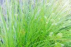 Blurred background Stock Photography