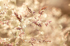 Blurred  background on a summer meadow Royalty Free Stock Image
