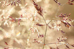 Blurred background on a summer meadow stock photo