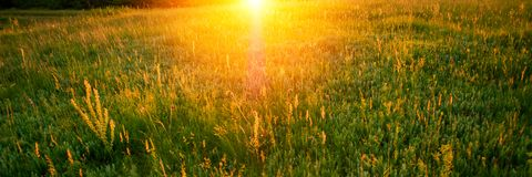 Blurred background, sunbeam of light in the early morning in the meadow. Web banner for your design stock image