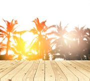 Blurred background, sunrise at coconut palm tree with wood floor Stock Images