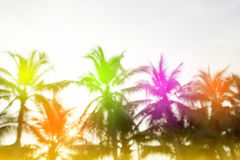 Blurred background, sunrise at coconut tree. Background Royalty Free Stock Image