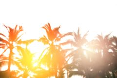 Blurred background, sunrise at coconut tree Royalty Free Stock Images