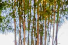 The blurred. Background and texture of bamboo Stock Photos
