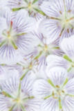 Blurred background of white flowers Stock Photo