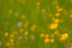 Blurred background with yellow flowers Stock Photos