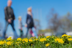 Blurred background of Young family with kids in park, spring season, green grass meadow, bright yellow young dandelions Stock Photo