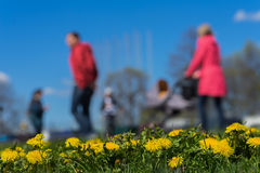 Blurred background of Young family with kids, pram in park, spring season, green grass meadow. In the foreground, bright Royalty Free Stock Images