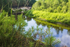 Blurred background young trees on the river bank Stock Images