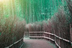 Blurred The bamboo forest after Depression. At Kyoto, Japan.  Nature with sunset Royalty Free Stock Photography