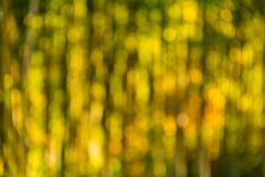 Blurred bamboo grove in sunny day. Background image of blurred bamboo grove in sunny day closeup stock photography