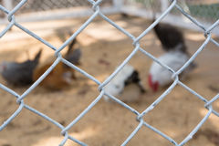 Blurred bantam cage stock photo