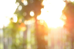 Blurred bokeh background - sunlight shining through the trees Royalty Free Stock Photography
