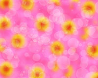 Blurred bokeh beautifu pink zinnia flower Stock Photo